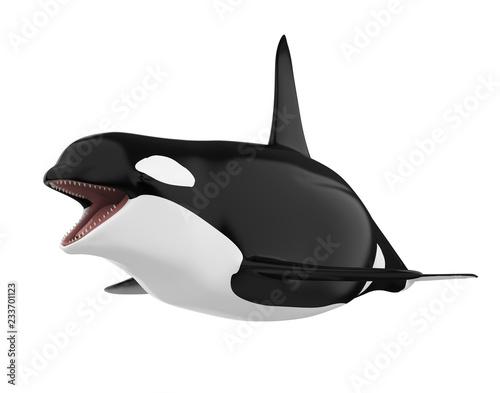 Fototapeta premium Orka na białym tle