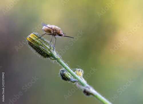 Fotografía  Mosquito insecto rama verde aguijón alas pelos fondo amarillo