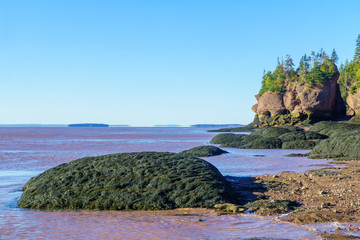 Hopewell Rocks coast at low tide