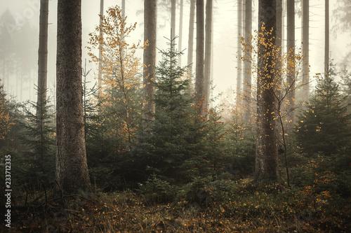 Plakat Mgła w lesie Kaufunger