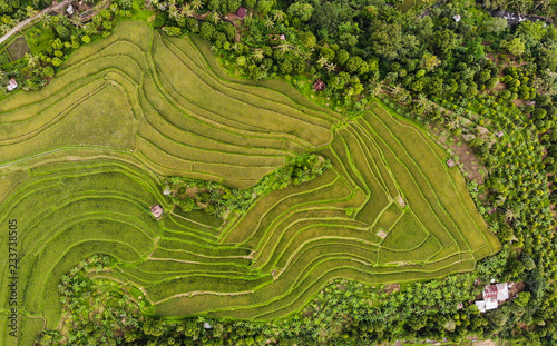 Garden Poster Rice fields Indonesian Rice Paddies, Rice Shelf, Rice terrace, Stacked rice fields, Rice Fields Bali, Bali, Growing Rice, drone photos, Birds eye, from Above