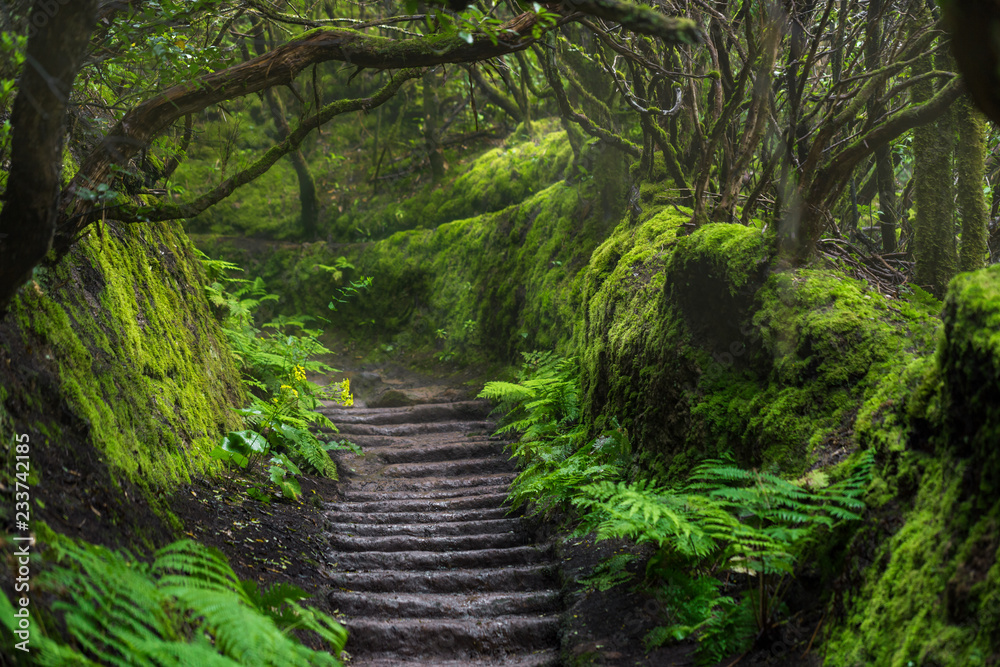 Path in Anaga Rainforest on Tenerife island, Spain.