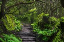 Path In Anaga Rainforest On Te...