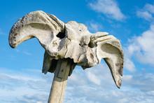Great Britain Scotland, Birsay, Sculpture Of Right Whalebones, 'Birsay Whalebone'