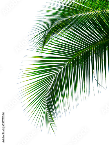 Türaufkleber Palms tropical coconut palm leaf isolated on white background