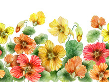 Beautiful Nasturtium Flowers With Green Leaves On White Background. Seamless Floral Pattern. Watercolor Painting. Hand Drawn And Painted Illustration.
