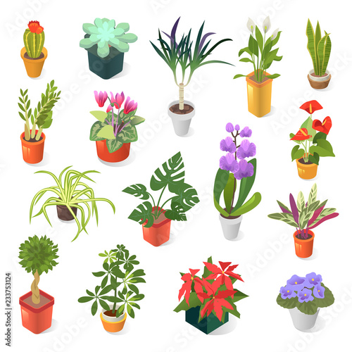 Home plant for green home decoration isometric icon set