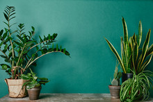 Different Plants On Rusty Table On Green Background