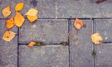 Yellow Autumn Leaves On Stone Ground Texture Background