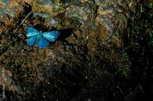 Fotografie, Obraz  Blue fly