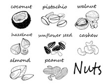 Hand Drawn Various Nuts And Se...
