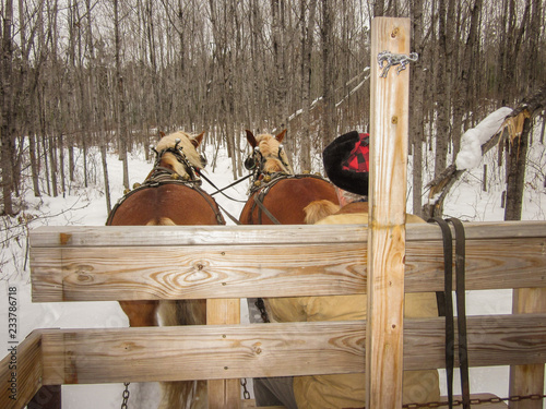 Two Horses pulling wooden cart