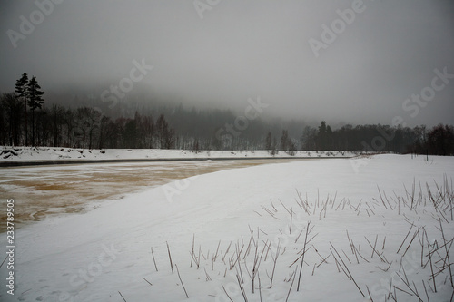 Poster Donkergrijs wild forest in winter with high level of snow