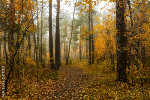 Papiers peints Forets walk in the autumn forest. autumn colors. autumn fogs. melancholy.