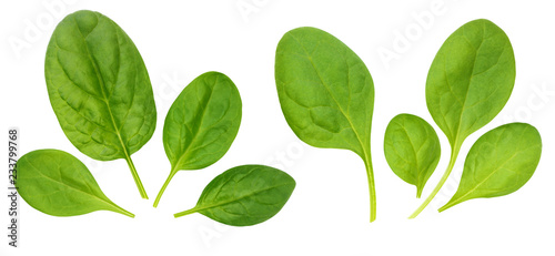 Poster Condiments Corn salad leaves, isolated on a white background