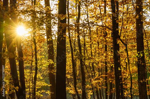 Foto op Plexiglas Landschappen Herbstsonne mit Blendenstern im Laubwald