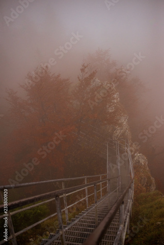 Fotografía  Misty path