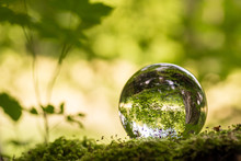 Glaskugel Im Grünen