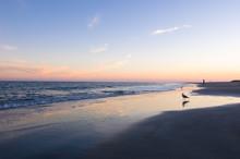 Seagull Walks On The Beach At Tybee Island Georgia At Sunset