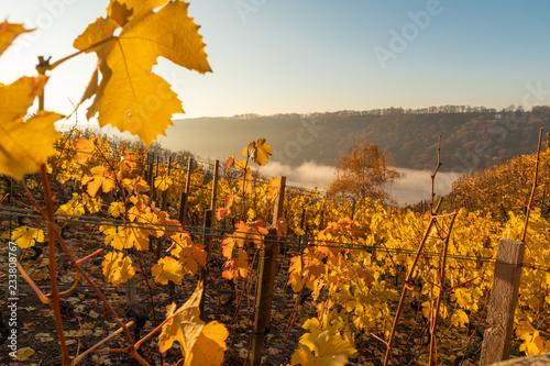 Fotografía  Herbst im Weinberg mit Nebel im Tal