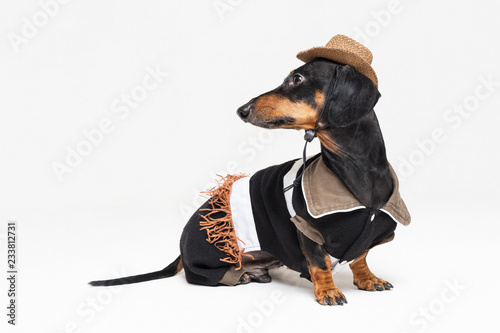 portrait of cute dachshund dog with Cowboy costume and western hat isolated on gray background Canvas Print