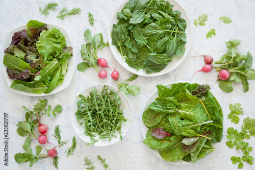 Fresh mixed greens, spinach, chard and arugula with radishes, cilantro and dill Wallpaper Mural