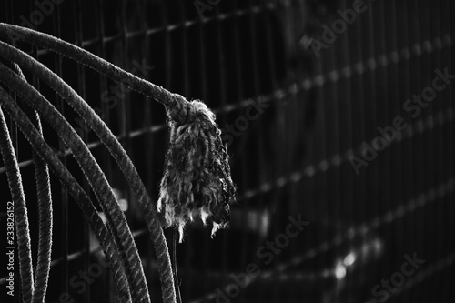 Black and white western rope frayed closeup.