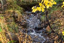 Litet Vattendrag I Skogen