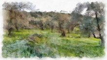 Olives Fields Painting