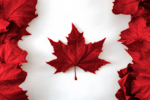Happy Canada Day Concept With The Canadian Flag Made Out Of Real Dead Maple Leaves Colored In Red On White Background