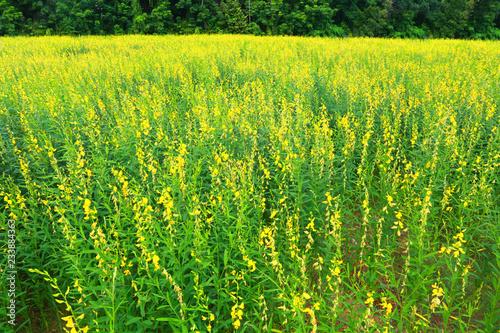 Flower field.