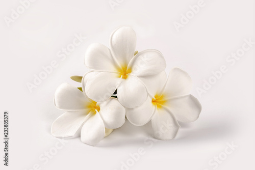 Plumeria flowers isolated on white background.