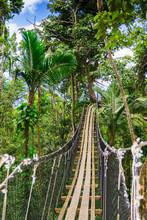Hanging Bridge In Mamelles Parc, Bouillante, Basse-Terre, Guadeloupe