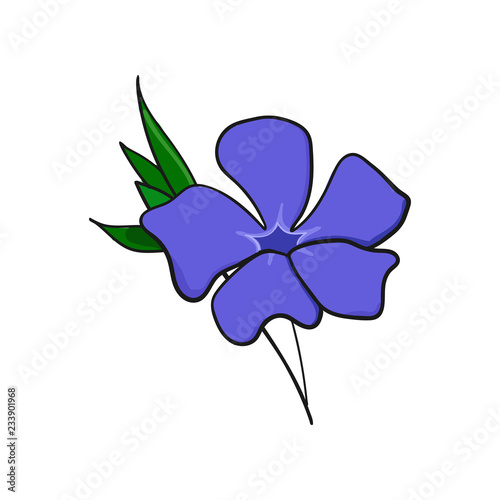 Fotografie, Obraz periwinkle flower. bud and leaves of vinca.