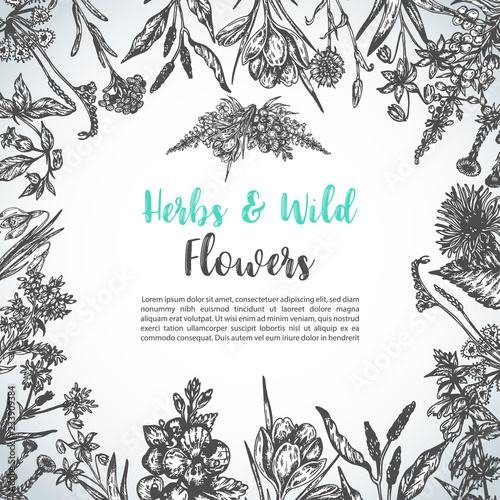 Valokuva  Background with Hand drawn herbs and wild flowers Vintage collection of Plants F