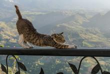 Cat Stretching On Iron Railing With Nice Landscape Backround