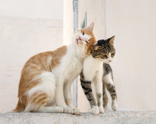 Two Cats Rubbing Their Heads Against Each Other, Aegean Island, Greece, Europe