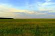 green fields towards horizon