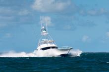 Sport Fishing Charter Boat In ...