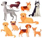 Fototapeta Fototapety na ścianę do pokoju dziecięcego - Dogs pets character. Labrador dog, golden retriever and husky. Cartoon vector isolated illustration set