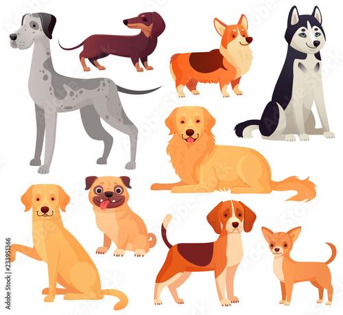 Obraz na płótnie Dogs pets character