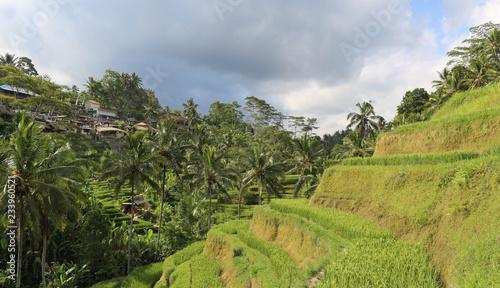 Poster Rijstvelden Terraced rice fields in Asia, Bali