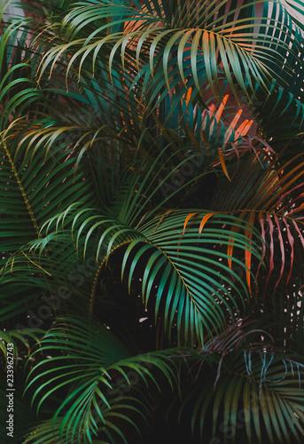 liscie-palmowe-pionowe