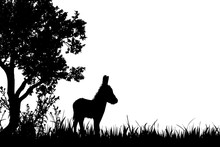 Vector Silhouette Of Donkey On...