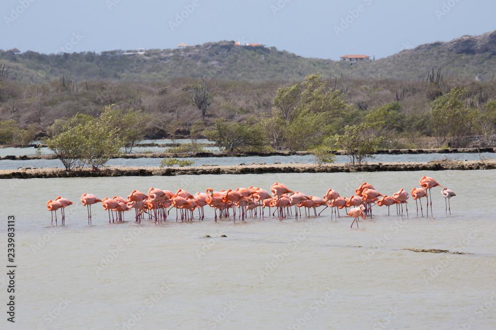 Flamingo-Gruppe im See