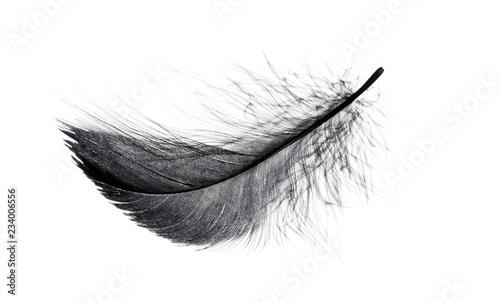 Fotografiet  Single black floating feather on white background.