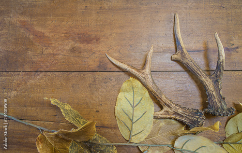Poster Chasse Deer antlers on dry autumn leaves on vintage wooden background