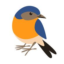 Eastern Bluebird,flat Style, Front