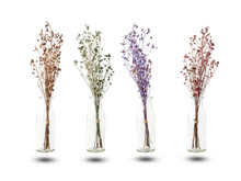 Bouquet Of Dried And Wilted Purple, Green, Red And Brown Gypsophila Flowers In Glass Bottle Isolated On White Background