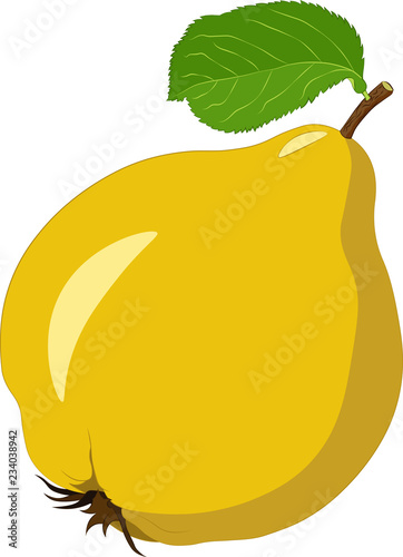 Tableau sur Toile Quince isolated on white background